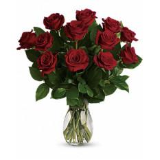 True Love Delight - Long Rose Rouge (Standard)