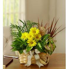 Jardin à vaisselle aux fleurs coupées fraîches (petit)
