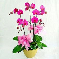 Purple orchidée