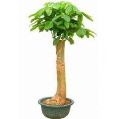 Arbre de la plante