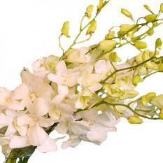 Douzaine de bouquet d'orchidées blanches