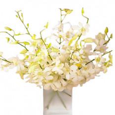 Orchidée perle
