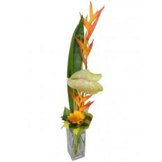 Bouquet et hauteur-8