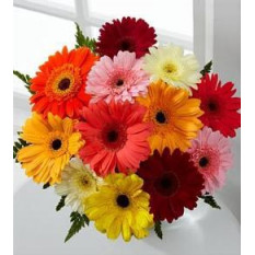 Gerbera Mixte En Bouquet
