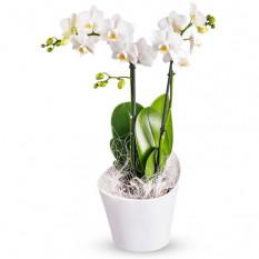 Orchidées pour le changement et carte-cadeau