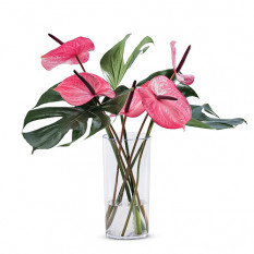 Bouquet tropical rose dans un vase en plexi