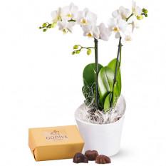 Orchidée et pralines