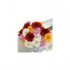 Flower Box Gerbera Couleurs mélangées 30 pcs