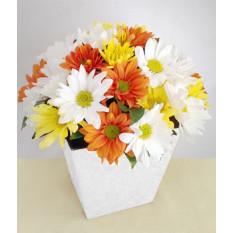 Floraison: Daisy décorée