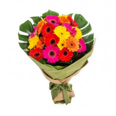 Gerberas Colour Burst (20 Tiges)