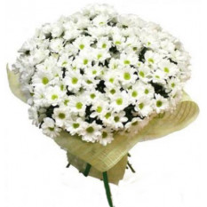 Bouquet de chrysanthèmes blancs