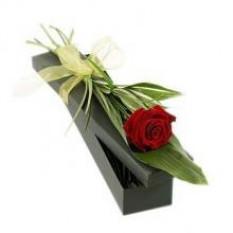 Rose rouge unique dans une boîte cadeau