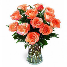 12 Roses Roses Orange