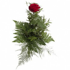 Bouquet de rose rouge unique