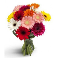 12 bouquet de gerberas mixtes
