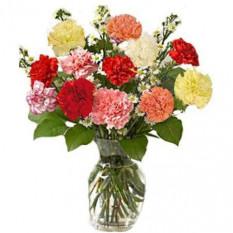 12 Mix Carnations Vase