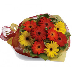 Gerbera Brights (Small)
